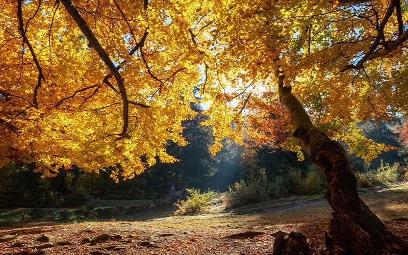 Fall = Personal Branding Season